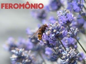 Feromônio, o hormônio da atração. Ele funciona?