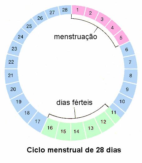 Divisão do ciclo menstrual