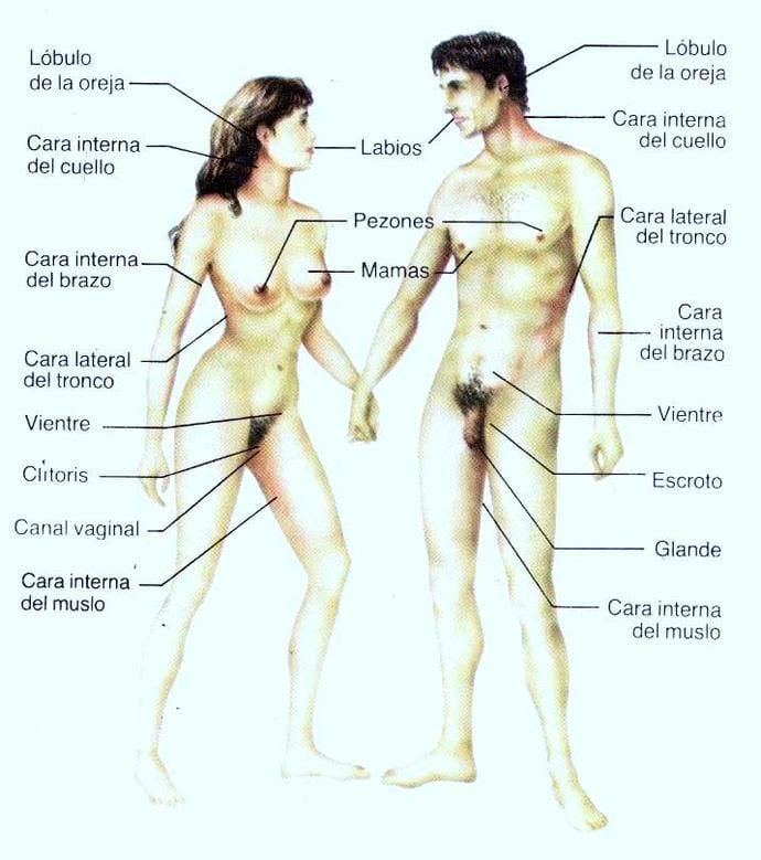 As zonas erógenas do corpo