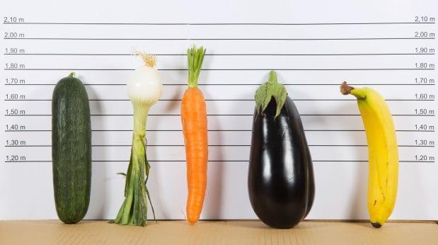 Tipos de pênis
