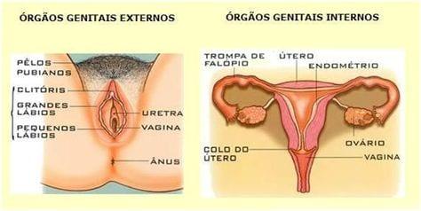 Aparelho genital feminino