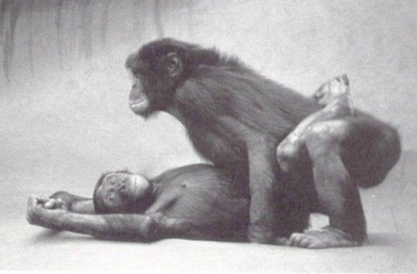 Papai e mamãe na evolução do homem