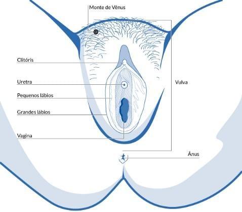 Diferença entre vagina e vulva