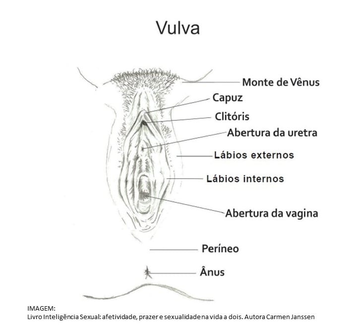 Estrutura da Vulva