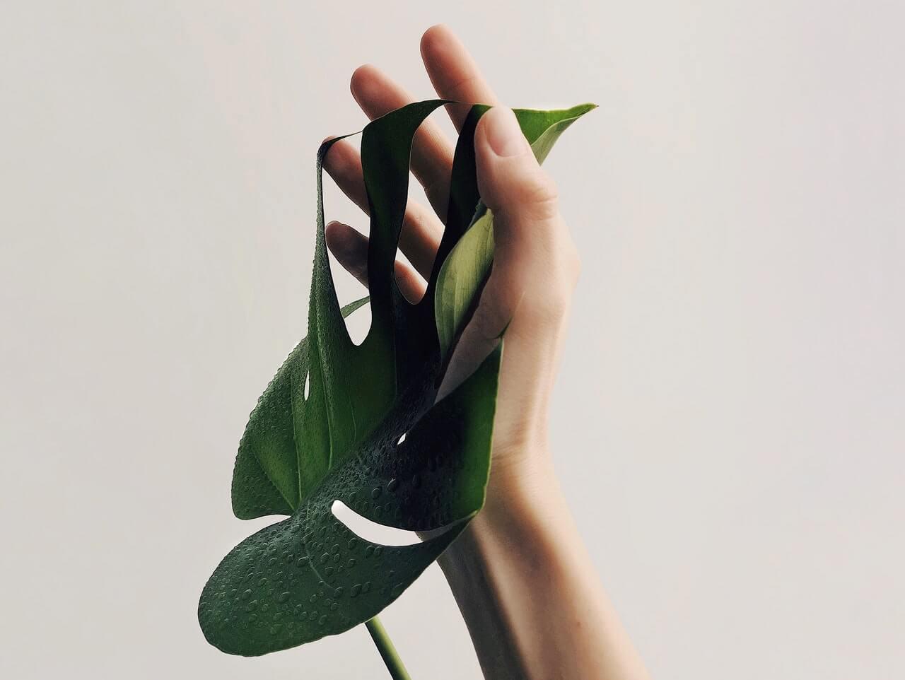 Mãos e zonas erógenas