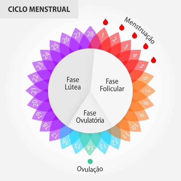 Fases do ciclo menstrual